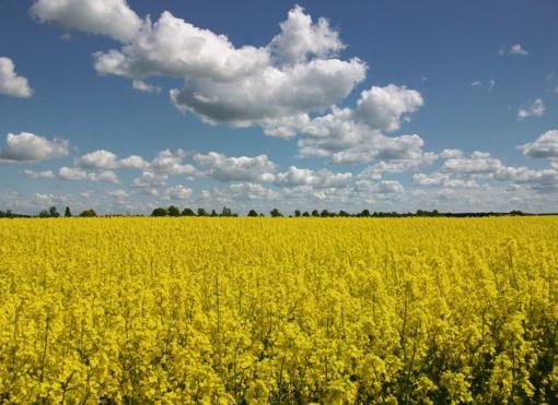 Gaisro paveiktos teritorijos dirvožemis augalininkystei – tinkamas