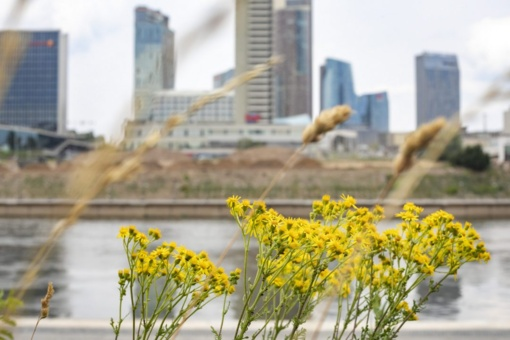 Vilnius imasi naujos vejų šienavimo strategijos: sieks atkurti natūralias pievas