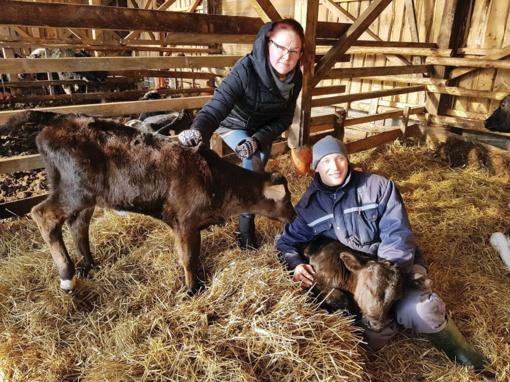 Ne tik supirkimo kainos krinta, bet ir pirkti niekas nenori: mėsinių galvijų augintojai – nepavydėtinoje situacijoje