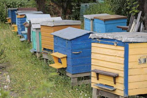Vagių taikinys – bičių aviliai