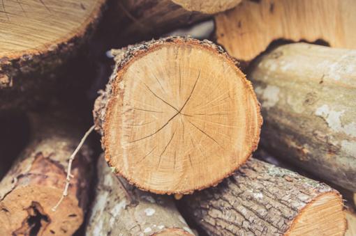 Pasvalio rajone pavogta mediena: patirtas didelis nuostolis