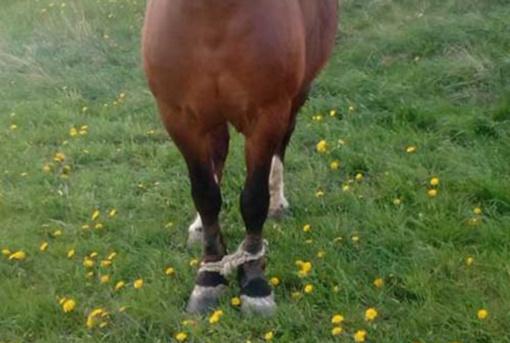 GGI akiratyje – ir vėl supančiotas arklys