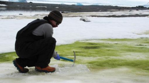 Klimato krizė gali neatpažįstamai pakeisti Antarktidą: žemynas sparčiai žaliuoja