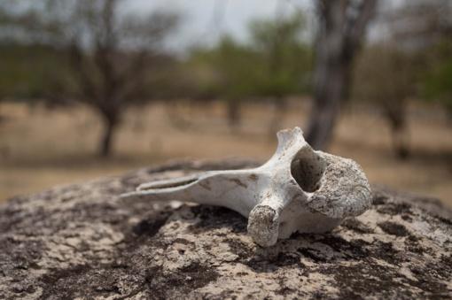 Alytaus rajone rasta žmogaus kaulų ir šovinių