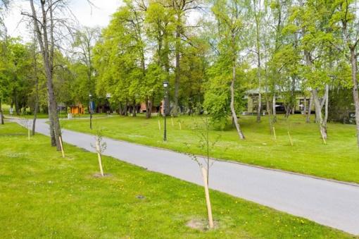 Birštono viešąsias erdves puošia naujai pasodinti dekoratyviniai augalai ir želdiniai