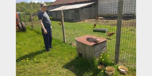Šaravų kaime vilkas papjovė du prie būdos pririštus šunis