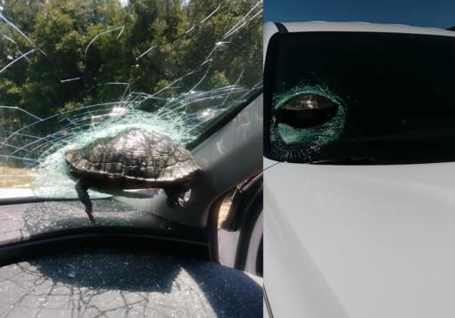 Neeilinis eismo įvykis: vėžlys rėžėsi į važiuojančio automobilio priekinį stiklą