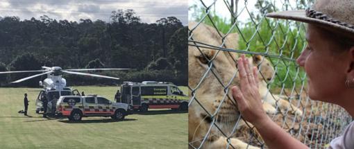 Uždarytame zoologijos sode Australijoje du liūtai apdraskė prižiūrėtoją, jos būklė kritinė