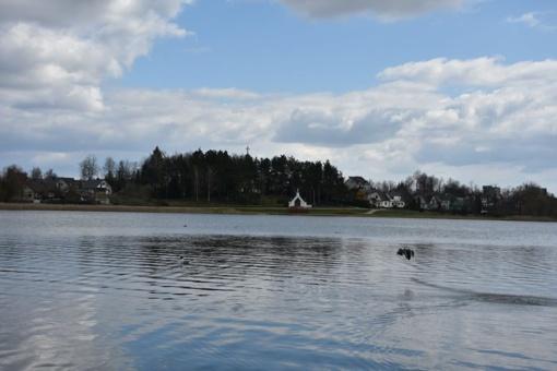 Nerekomenduojama maudytis vienoje Dauniškio ežero maudykloje