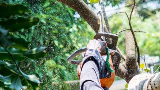 Nuo šiol kirsti ar genėti medžius leidimo reikės ne visada