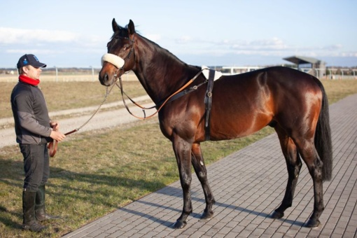 Lazdijuose – karališkosios šeimos lenktyninių žirgų žirgyne dirbęs treneris L. Balčiūnas