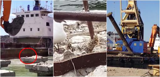 Klaipėdos uosto teritorijoje masiškai naikinami kirų lizdai?