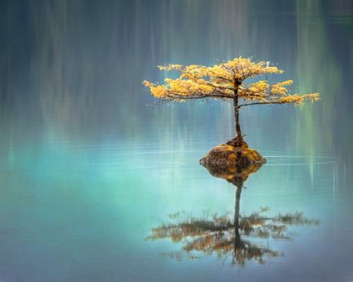 Šmaikštūs posakiai – gyvenimo  džiaugsmui