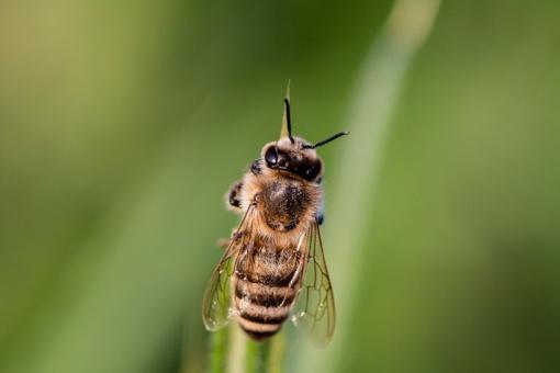 Vasaros košmaras – geliantys vabzdžiai: vaistininkas pataria, kas padėtų apsisaugoti
