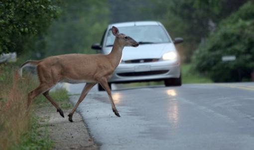 Jonavos rajone automobilis kliudė į kelią išbėgusį gyvūną