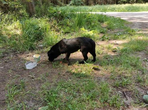 Prienų rajono miške rastas pasimetęs šunelis