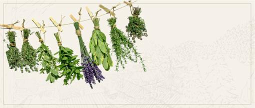 Kas yra homeopatija?