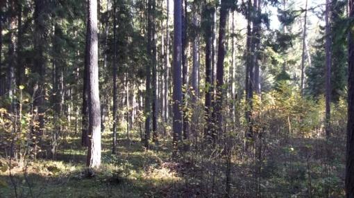 Miškai, ežerai ir upės privalo priklausyti valstybei