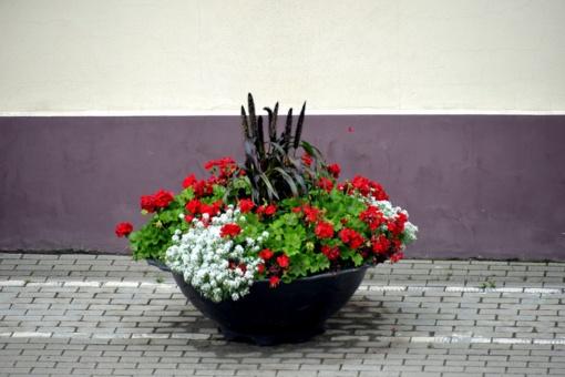 Visa tiesa apie daug diskusijų sulaukusius Šilalės miesto vazonus