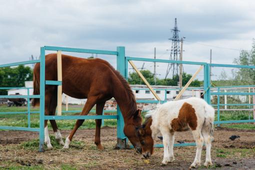 Kelmės rajone iš ganyklos pavogta kumelė