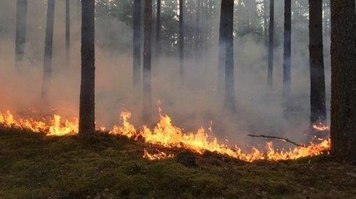 Lazdijų rajone degė miško paklotė