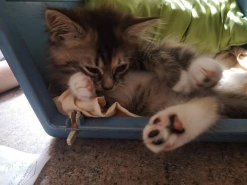 Katinams ieškoma globėjų