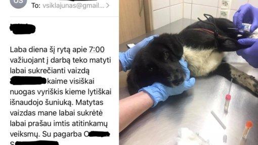 Apkalbos apie gyvūnų išnaudojimą virto realybe: šuo šoko būsenoje