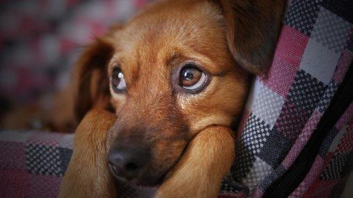 Kraupus įvykis Alytuje: pro langą išmetė šunį, palaikus išmetė į konteinerį