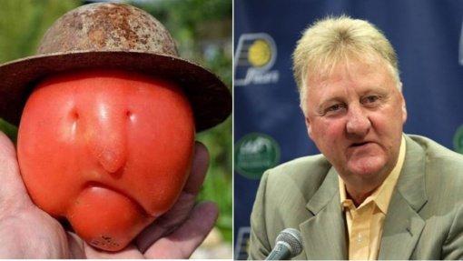 Pomidoras, panašus į NBA žvaigždę