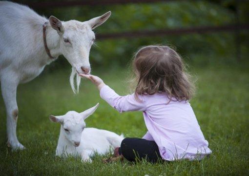 Šviečiamoji gyvulininkystės programa – trims Druskininkų švietimo įstaigoms