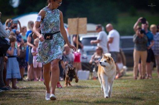 Druskininkuose gyvūnais pasirūpinta – nuo išskirtinio valgiaraščio šunims iki tarptautinių parodų