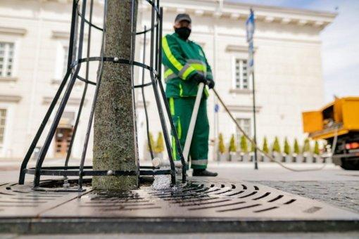 Žaliajame Vilniuje – rūpestis visais medžiais: prižiūrimi ir jauni, ir seni