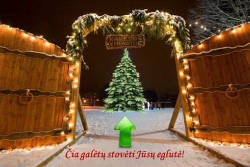 Visaginas rugpjūčio mėnesį pradeda kalėdinės eglutės paieškas: kviečia dovanoti žaliaskarę miestui