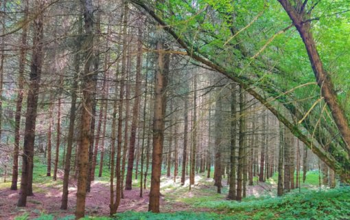 Atliktas miškų sanitarinės būklės patikrinimas