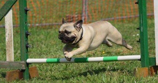 Palangos šunų vedžiojimo ir dresavimo aikštelės atidarymas – jau kitą savaitę