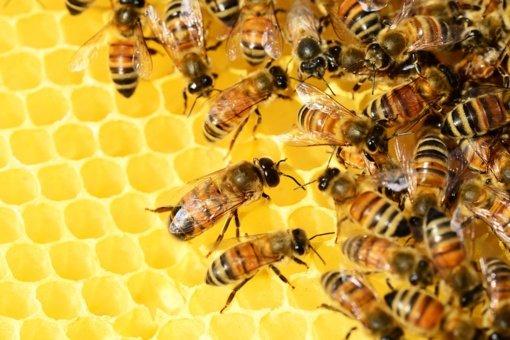 Parama bičių laikytojams už papildomą bičių maitinimą