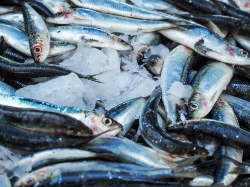Ištyrė maisto turguje pirktas jūrų gėrybes – visose aptikas plastikas