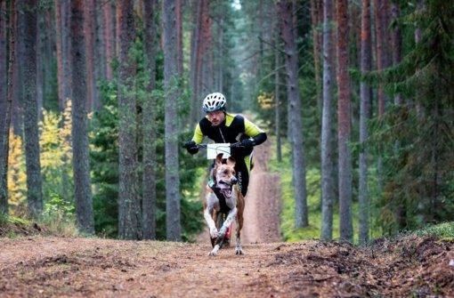 Šunų kinkinių sporto entuziastai pirmą kartą varžysis Alytuje