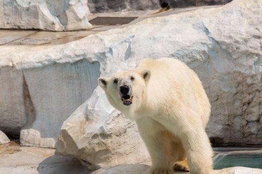 Svalbardo salyne Arktyje baltasis lokys mirtinai sudraskė žmogų
