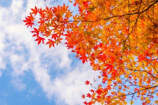 Orai Rugsėjo 1-osios nuotaikų negadins
