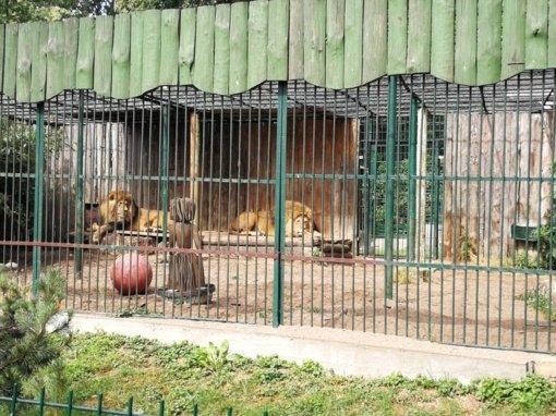Kauno zoologijos sodas nuo rugpjūčio 9 dienos uždaromas renovacijai