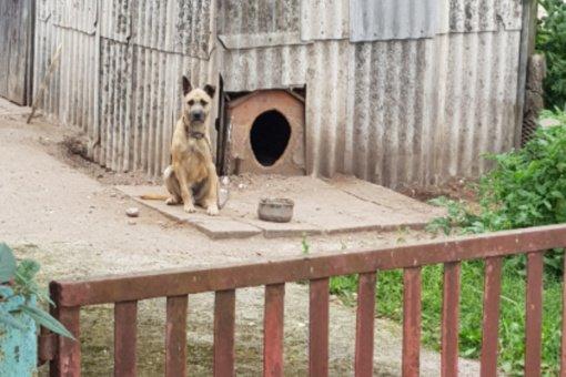 Jonavoje konfiskuotas metaliniu strypu muštas šuo ieškos naujų namų