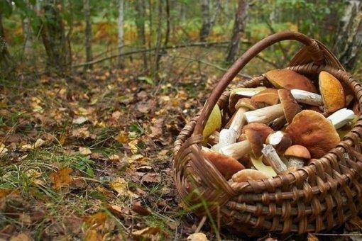Čiobiškio miške pasiklydusį senolį rado tik kitą dieną