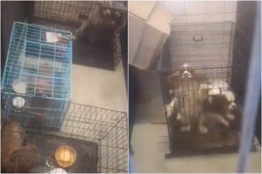 Dėl žiauraus elgesio su gyvūnais Kretingos rajone moteriai pareikšti įtarimai