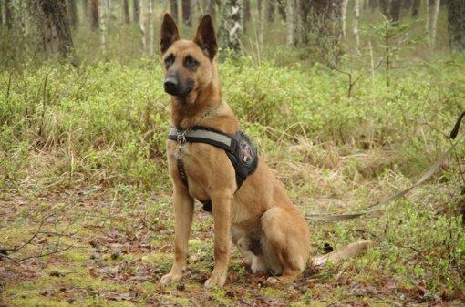 Pasieniečių šuo Gizas naktį miške surado pasiklydusį 76-erių grybautoją