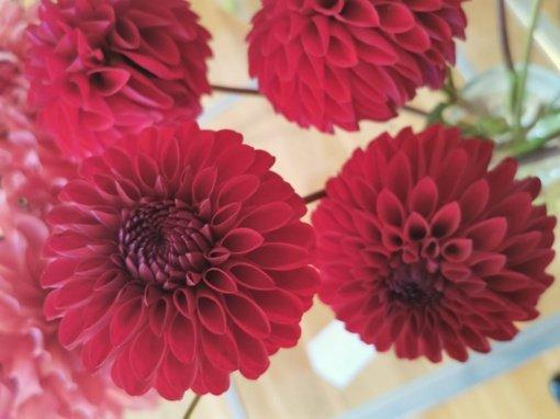 Birštono jurginų augintojų paroda: išskirtinių rūšių ir grožio žiedai bei išskirtinės kompozicijos