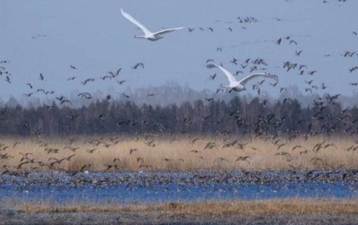 Ministerija – apie Žuvinto biosferos rezervatą: visuomenei teikiama klaidinanti informacija