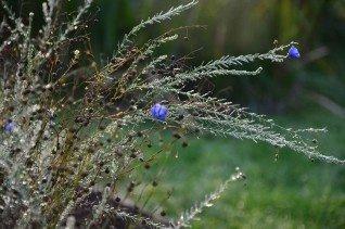 Šiaulių universiteto Botanikos sodas kviečia keistis augalais