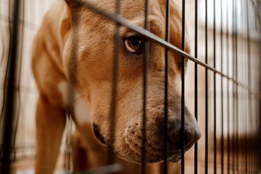 Žiaurų elgesį su gyvūnais siūloma priskirti prie kriminalinės žvalgybos tyrimo objektų