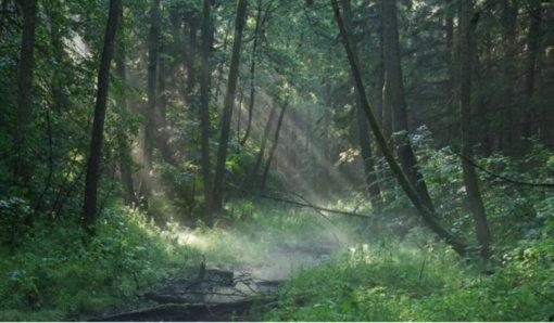 Miškas – pagalba kovoje su klimato kaita ar medžiaga naujam baldui?
